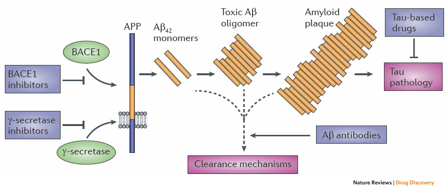amyloid primer